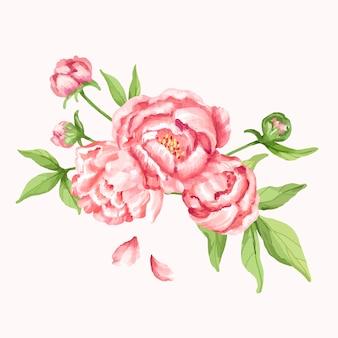 Hand drawn pink peony flower illustration