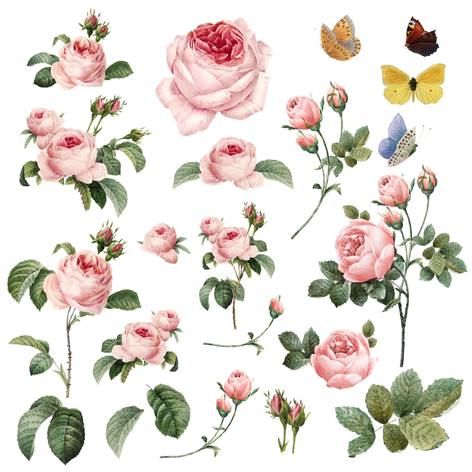 Hand drawn pink roses collection