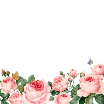 Hand drawn pink roses frame on white background