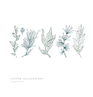 손으로 그린 식물 및 컬렉션입니다. 빈티지 새겨진 꽃 세트. 삽화