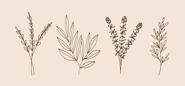 손으로 그린 식물과 허브
