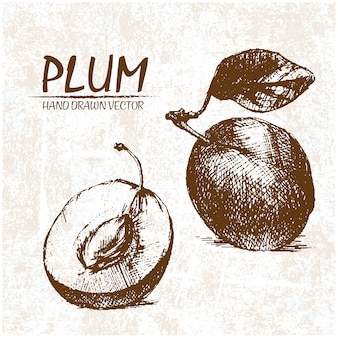 Hand drawn plum design