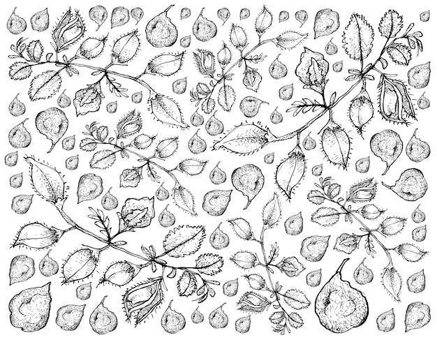Hand drawn of pod of chick peas background