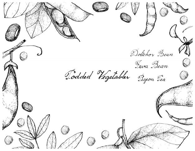 Hand drawn of podded vegetables frame
