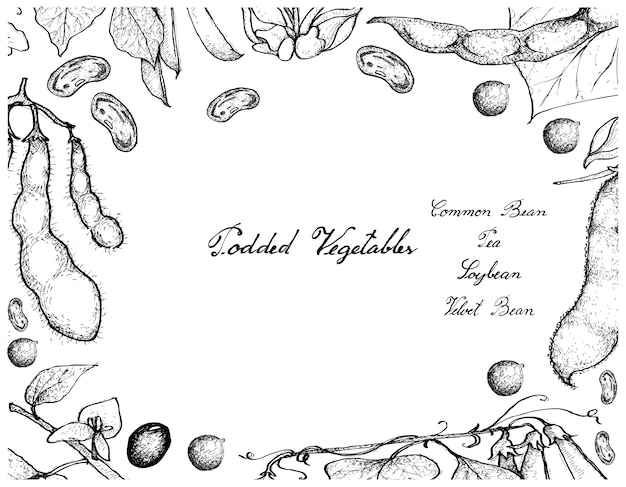Hand drawn of podded vegetables frame