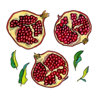 Hand drawn pomegranates set in decorative style