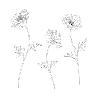 흰색 배경에 라인 아트가 있는 손으로 그린 양귀비 꽃 그림. 로고, 카드, 날짜, 인사말, 청첩장, 포스터, 배너를 위한 디자인 장식입니다.