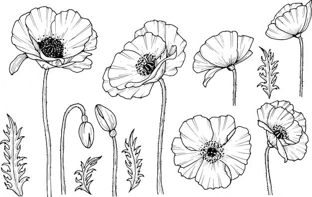 手描きのケシの花。ケシの薬のアイコン。白い背景に分離します。落書きを描きます。花のデザイン。線画