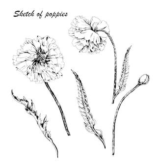 손으로 그린 양귀비 꽃 낙서 스타일 흑백 컨투어 양귀비 꽃의 벡터 양귀비 꽃
