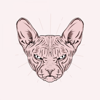 Hand drawn portrait of cute sphinx cat.  illustration