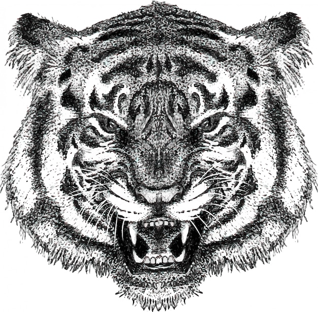 Hand drawn portrait of roaring tiger head