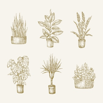 Hand drawn potted houseplants flowers with leaves sketches set home gardening doodle illustrations c...