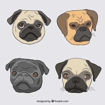 Hand drawn pug faces