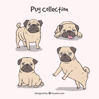 Hand drawn pugs with cute style