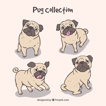 Hand drawn pugs with lovely style