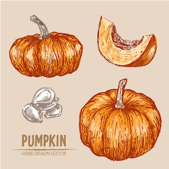 Hand drawn pumkin background