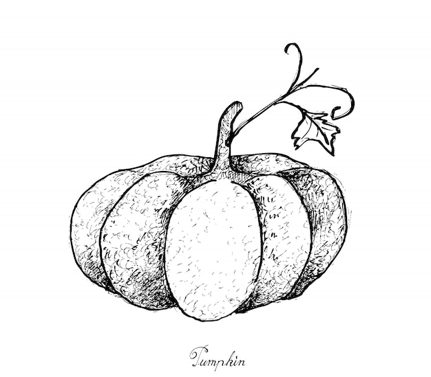 Hand drawn of pumpkins on a white background
