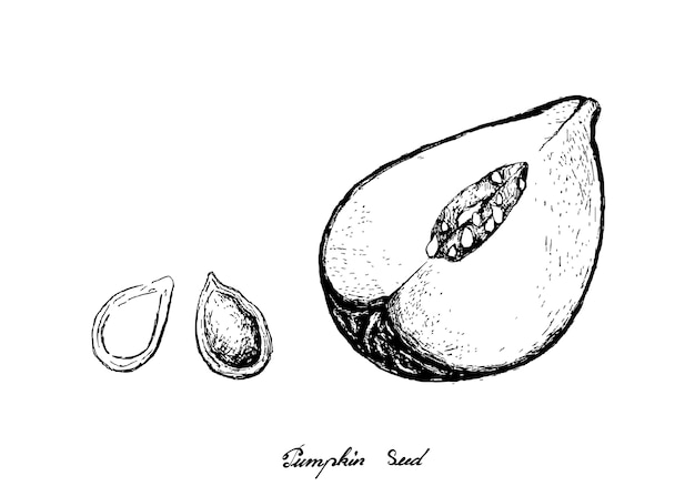 Hand drawn of pumpkins with seed on white