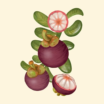 Hand drawn purple mangosteen isolated