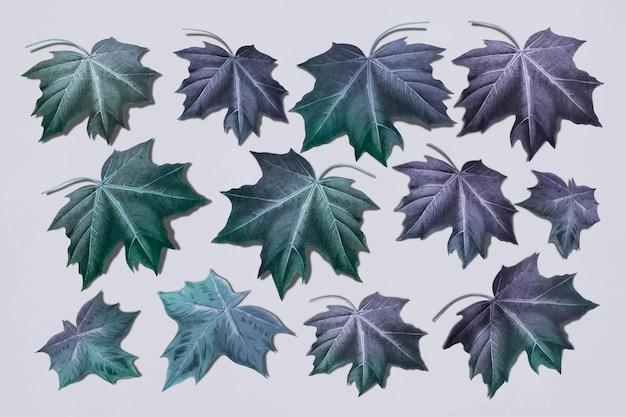 Hand drawn purplish green maple leaf collection vector