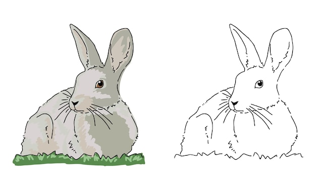 Hand drawn rabbit coloring page for kid