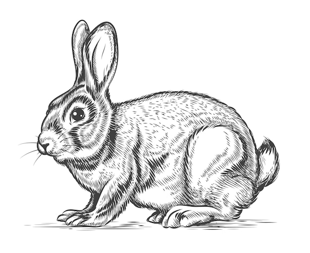 Ручной обращается кролик в стиле гравюры. зайчик и заяц, старинный дизайн-эскиз