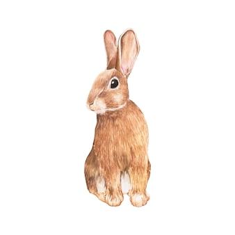 손으로 그린 토끼 흰색 배경에 고립