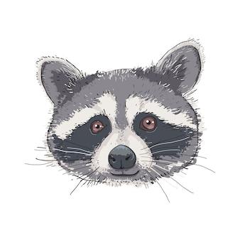 Лицо рисованной енота.