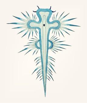 Hand drawn of radiated doris