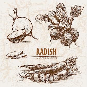 Hand drawn radish collection