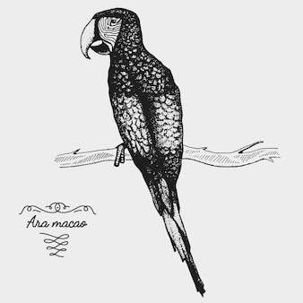 Hand drawn  realistic bird, sketch graphic style,