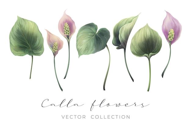 Hand-drawn realistic flower set
