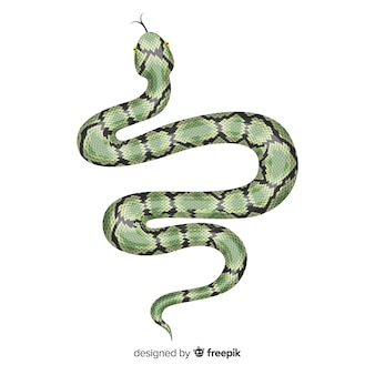 Hand drawn realistic snake illustration