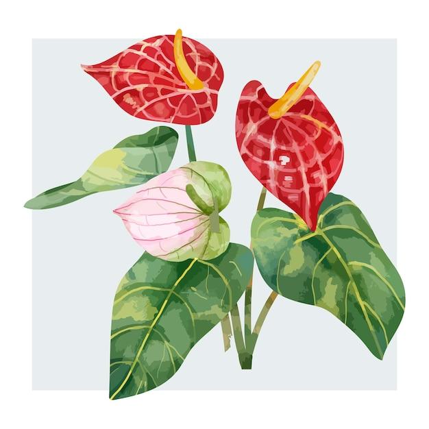 Рисованный красный цветок laceleaf