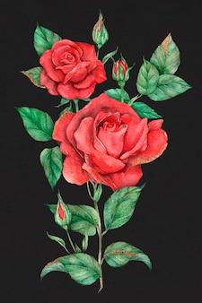 手描きの赤いバラの花