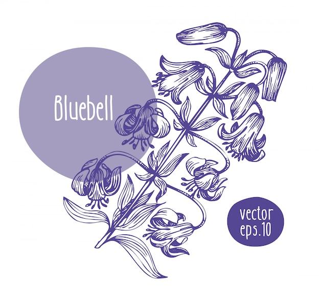Hand drawn retro bluebell.