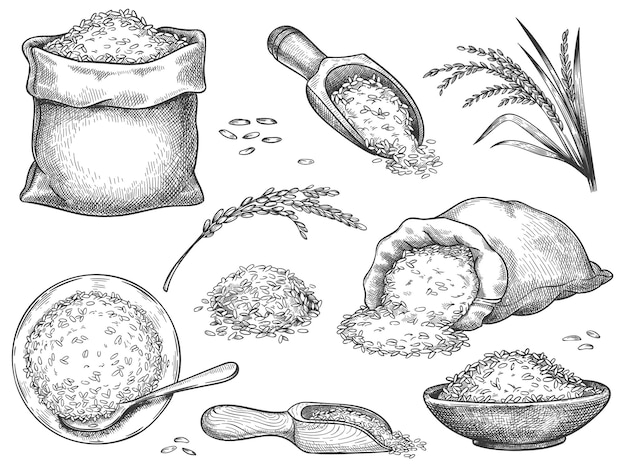 Hand drawn rice flour. retro engraving cereal spikelets of wheat, rye, barley, basmati or jasmine rice. grains in sack and scoop vector set. illustration rice engraving meal, collection heap seeds