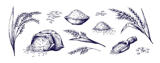 Hand drawn rice organic cereal in bag and rice porridge in bowl sketch doodle set of wild jasmine