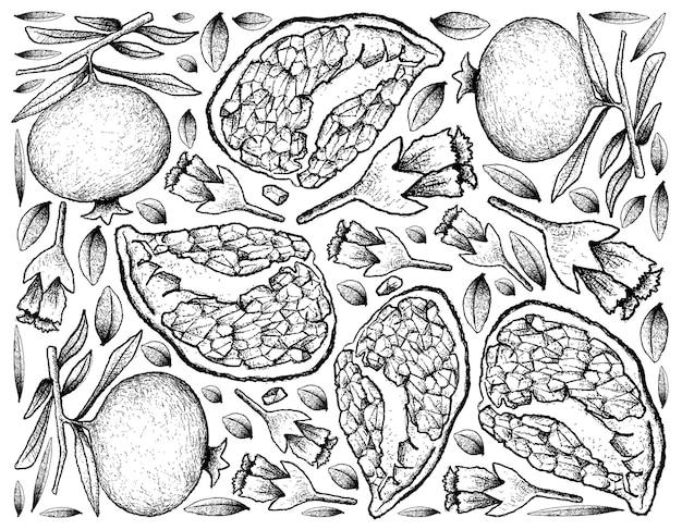 손으로 그린 익은 석류 열매