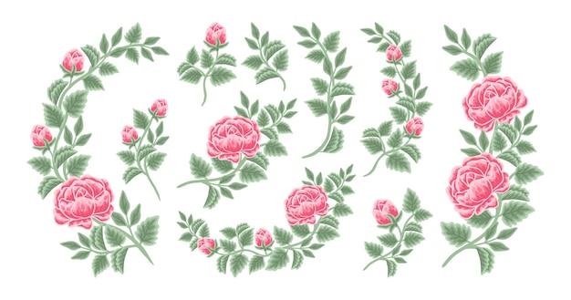 Hand drawn rose flower arrangement and bouquet element collection