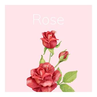手描きのバラの花のイラスト