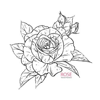 손으로 그린 장미 꽃 현실.