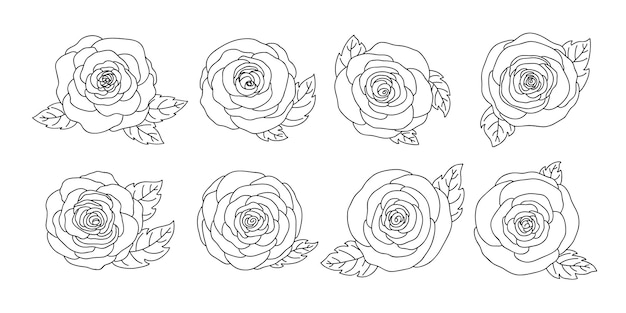Hand drawn rose flowers collection