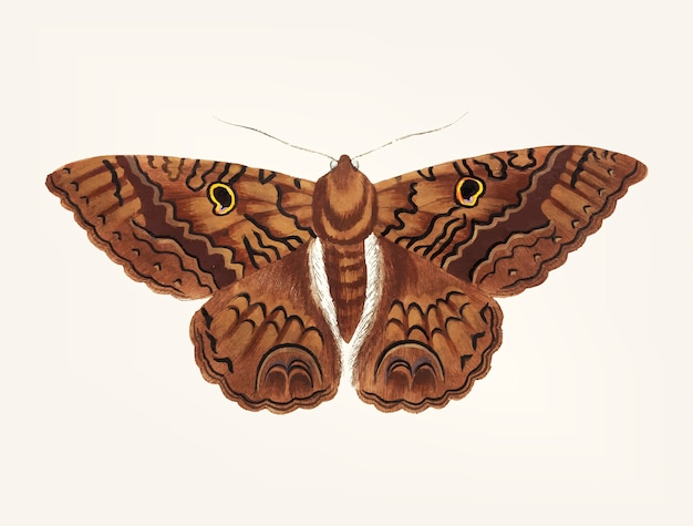 Hand drawn of sable moth Free Vector