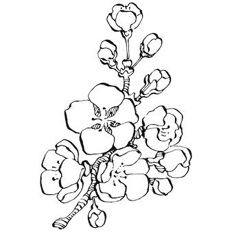 Нарисованная рукой цветочная сакура, гравюра винтажная иллюстрация