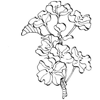 Рука нарисованные сакура