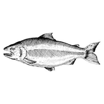 Hand drawn salmon fish