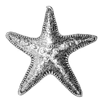 Ручная морская морская звезда