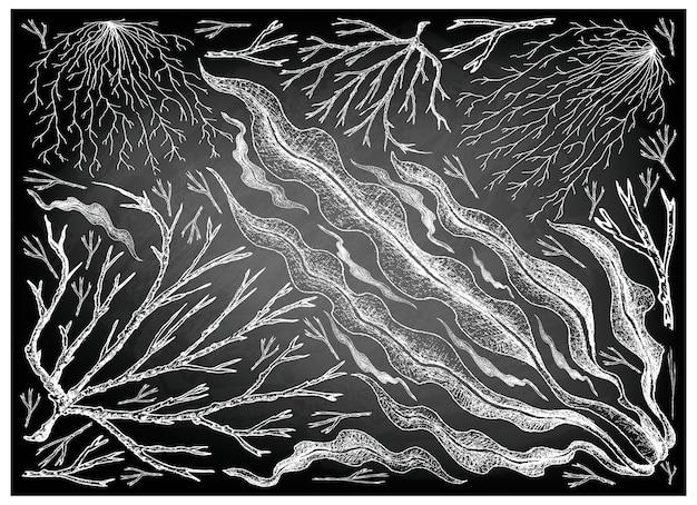 Hand drawn of sea vegetables or seaweed on chalkboard