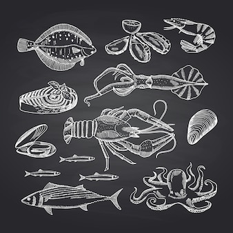 Hand drawn seafood elements on black chalkboard set. illustration of seafood sketch, oyster and shrimp, crab and lobster